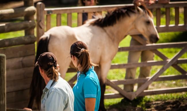 equicoaching cheval séminaire d'entreprise eventsmed